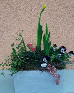 Frühlingsblüher im rechteckigen Steingefäß